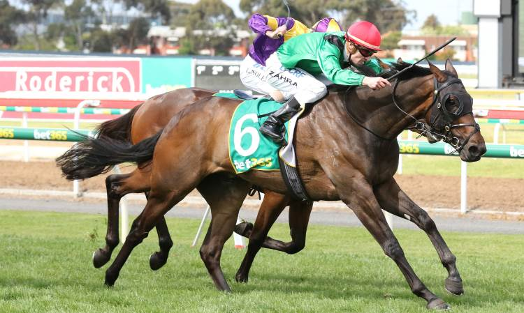 victoria derby 2017 horse racing preview and bets