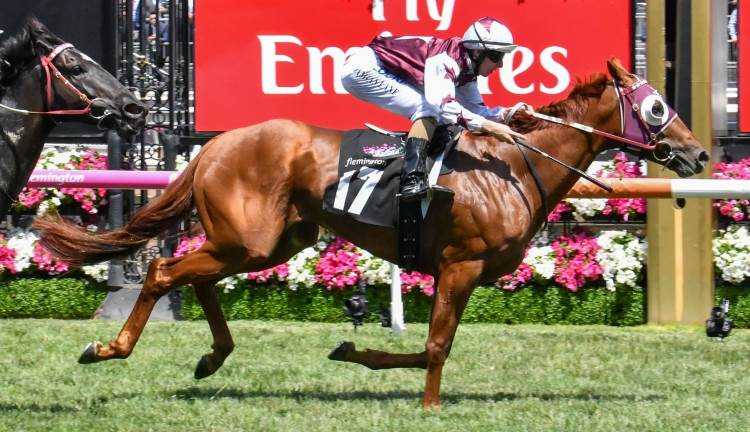December 9, 2017 – Saturday Horse Racing Tips For Rosehill and Packenham
