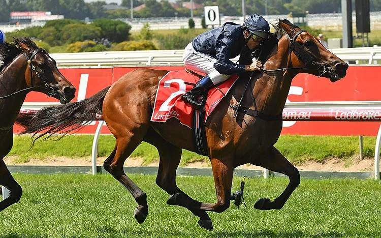 Blue Diamond Stakes 2018 – Field Preview, Odds & Tips