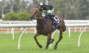 brook magic racehorse