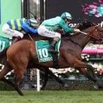 humidor racehorse