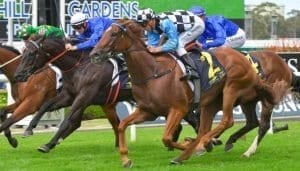 i am excited racehorse