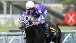 foxplay racehorse