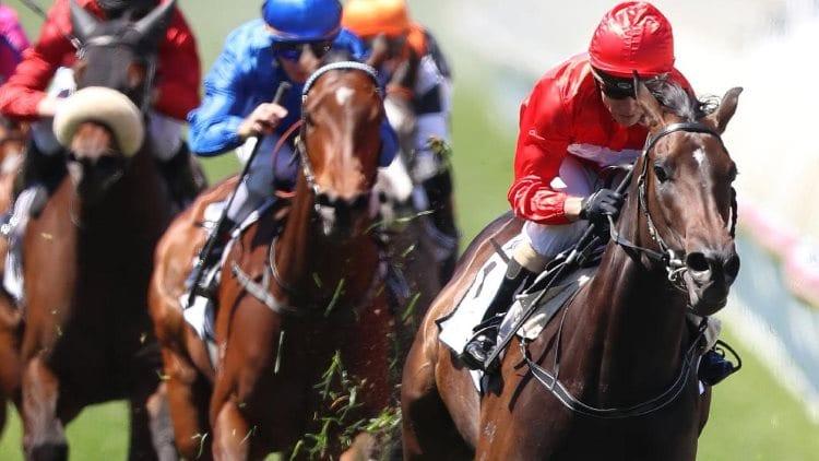 invincible star racehorse