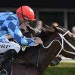 funstar racehorse