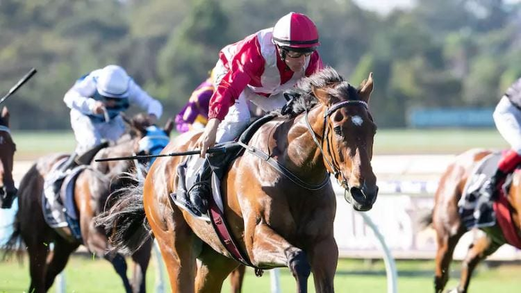 Kingston Town Classic 2019 – Horses, Betting Tips & Odds