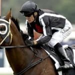 jungle edge racehorse