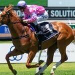 czarzon racehorse