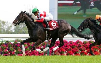 danon premium racehorse