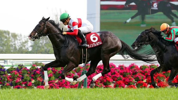Queen Elizabeth Stakes 2020 – Horses, Betting Tips & Odds