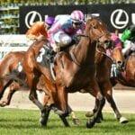 naantali racehorse
