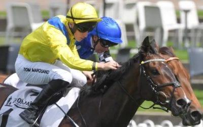 young rascal racehorse