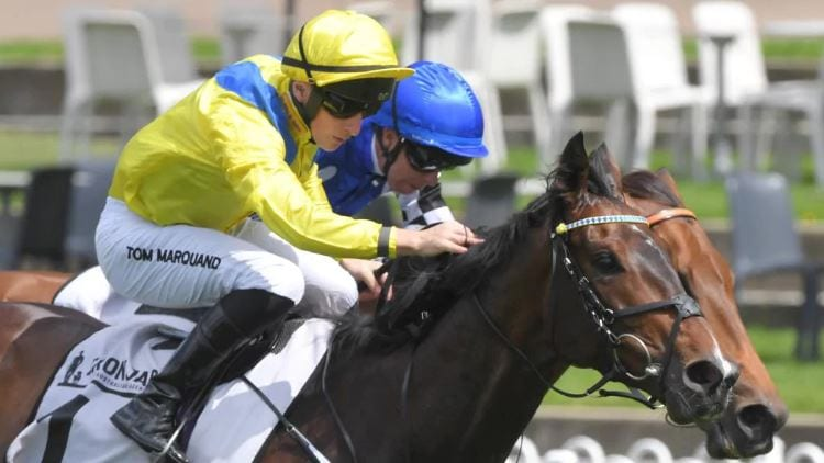 Sydney Cup 2020 – Horses, Betting Tips & Odds