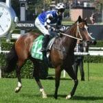aliferous racehorse