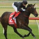 asgard massif racehorse