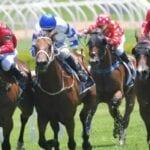 savigne racehorse