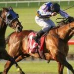 street sheik racehorse