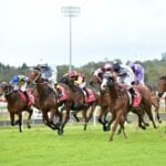 sunshine coast horse racing