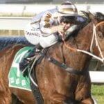 assertive approach racehorse