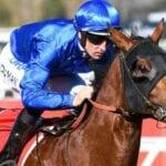 bivouac racehorse