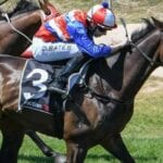 inayforhay racehorse
