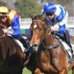 libertini racehorse