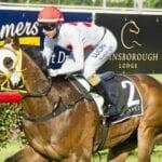 publishing power racehorse