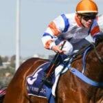 vinland racehorse