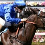 demerara racehorse