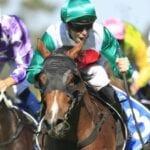 castelvecchio racehorse
