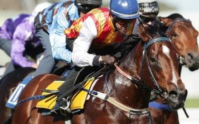 peltzer racehorse
