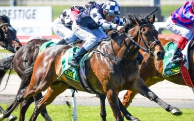 Victoria Derby 2020 – Horses, Betting Tips & Odds