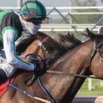 cosmic rhapsody racehorse