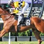 tambo's mate racehorse