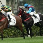 furore racehorse