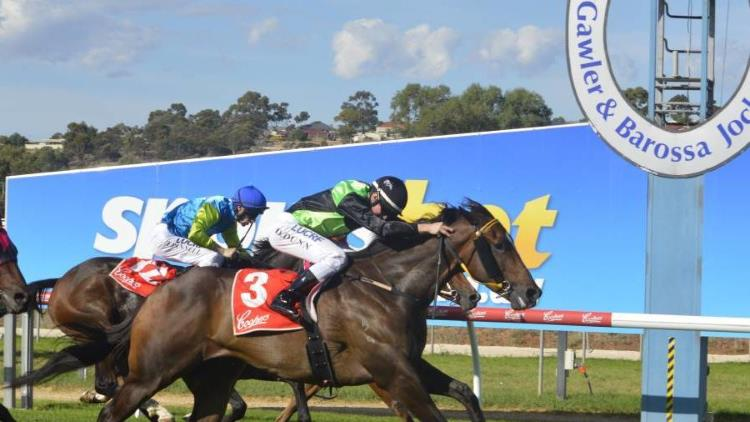 25/1/20 – Saturday Horse Racing Tips for Gawler