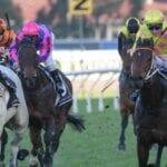 albumin racehorse