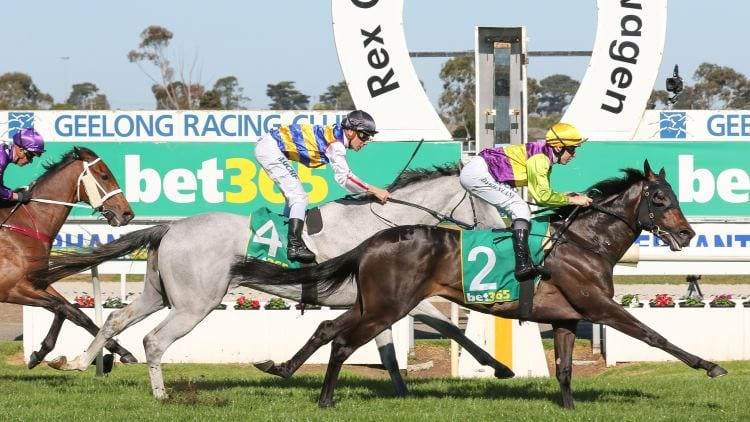 2020 Geelong Cup Day Betting Tips