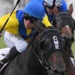 cellsabeel racehorse