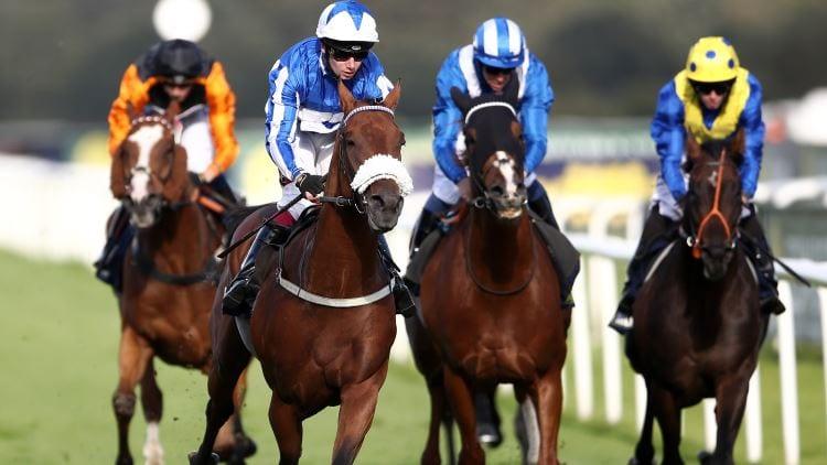 race horse noseband