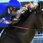 roheryn racehorse