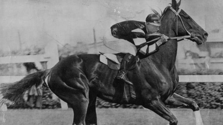 Phar Lap Racehorse