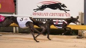 albion park greyhound racing tips
