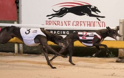 8/10/20 – Thursday Greyhound Racing Tips for Albion Park
