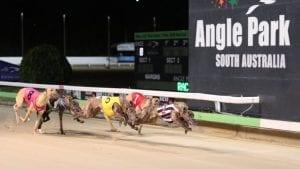 angle park greyhound racing tips