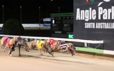 07/01/21 – Thursday Greyhound Racing Tips for Angle Park