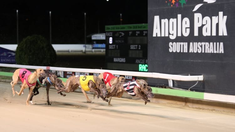 03/12/20 – Thursday Greyhound Racing Tips for Angle Park