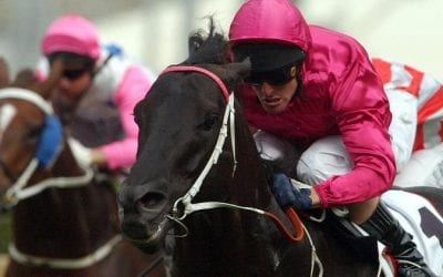 Lonhro Racehorse