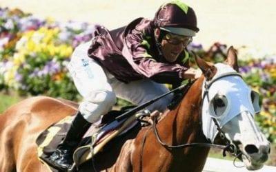 apache cat racehorse