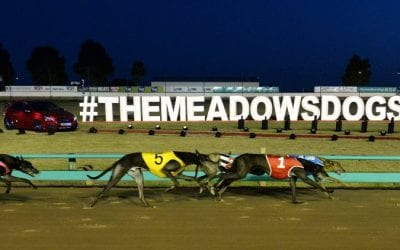 19/9/20 – Saturday Greyhound Racing Tips for The Meadows